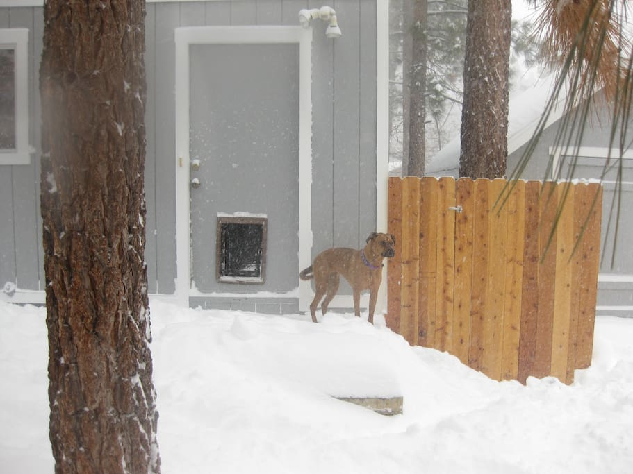 Closed off backyard so your dog can go in and out and roam the backyard without leaving