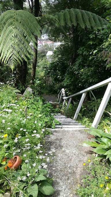 Fern tree lined steps to house