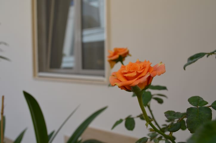 fiori a casa low cost