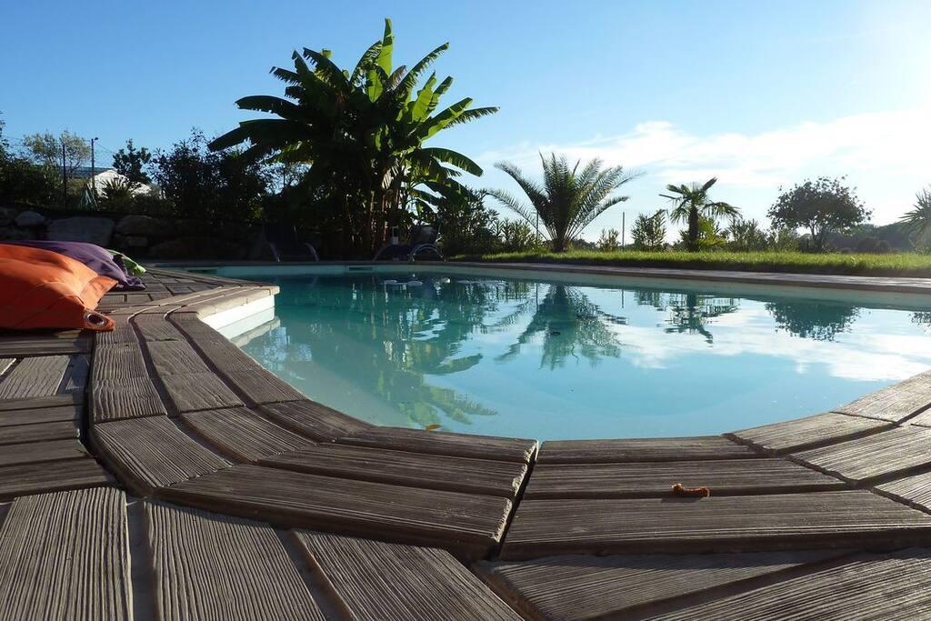 La piscine entourée de palmiers, de cocotiers et de bananiers