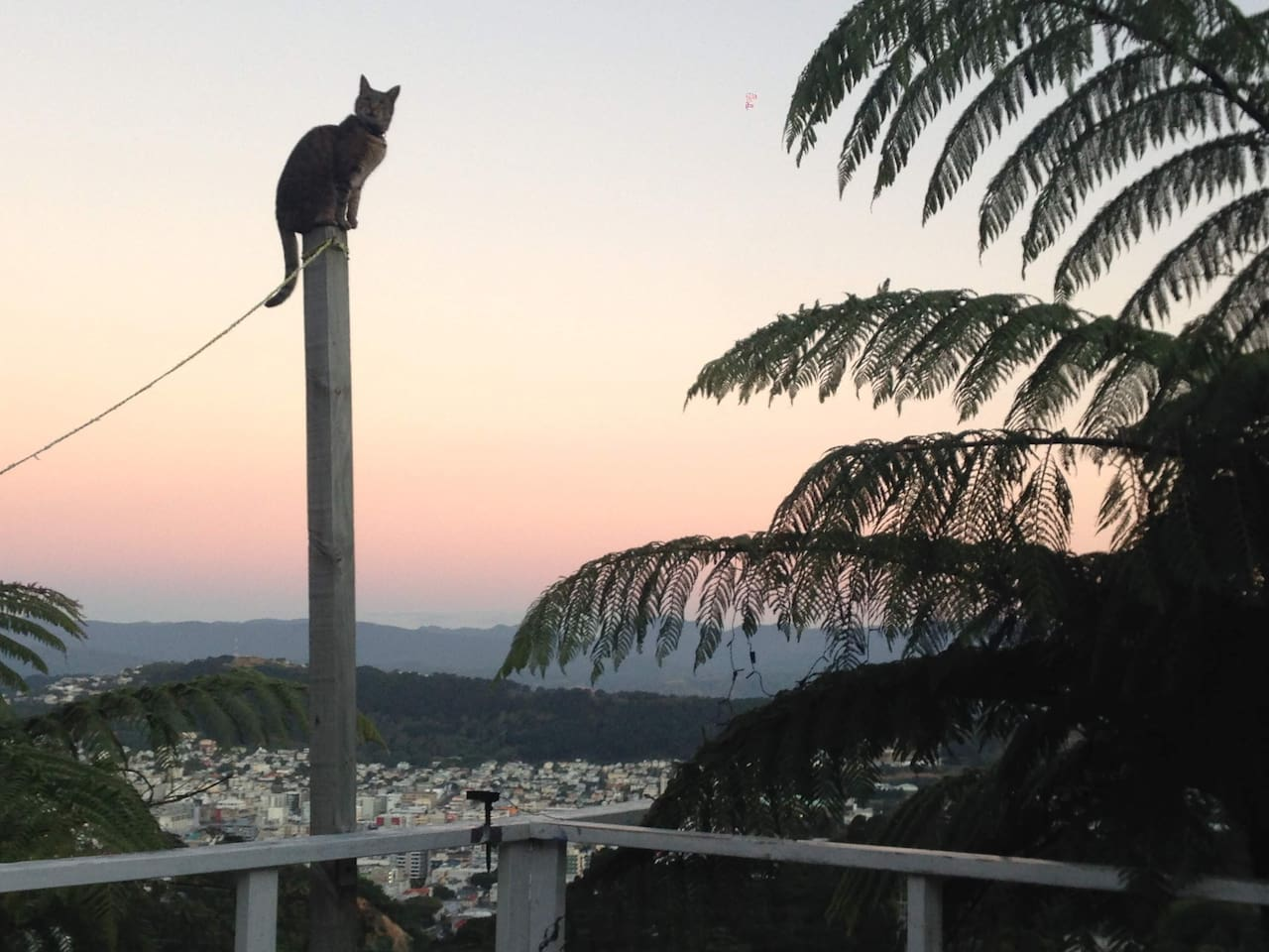 Lydie Greco of #MagicDeciptor fame photograph of Rigga on top of post in a sunset background with Wellington city and Mt Victoria.