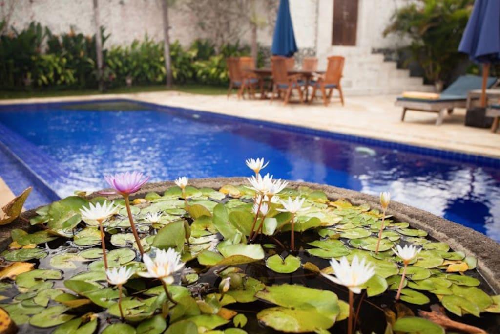 pool lilliies2