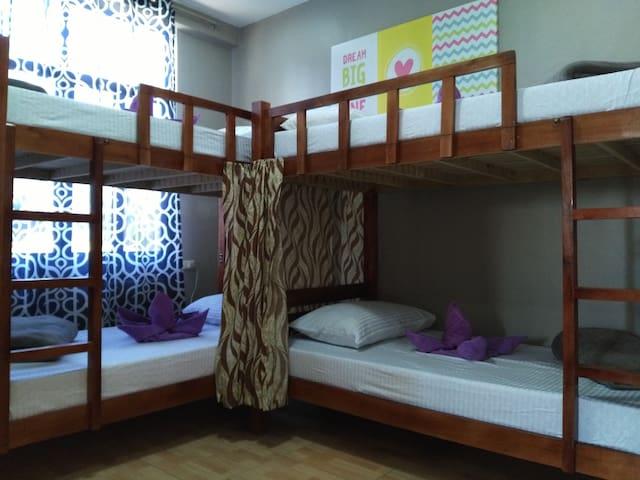 """六人间的一个床位,来""""一粒沙时光旅馆"""",去潜水,去看海岛、沙滩、海龟、鲸鲨、海豚……"""