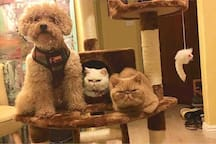 Our pets: BB the poodle, Cupcake and Garfield the cats