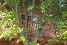Facciata con balcone e tiglio