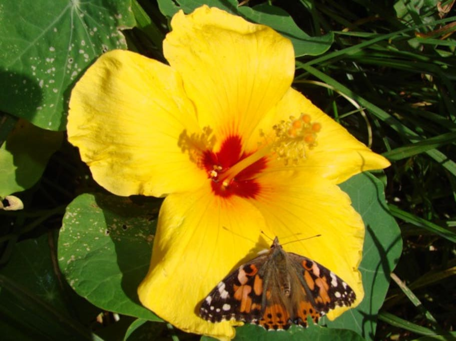 Lots of colorful flowers and a variety of butterflies are found throughout the property..