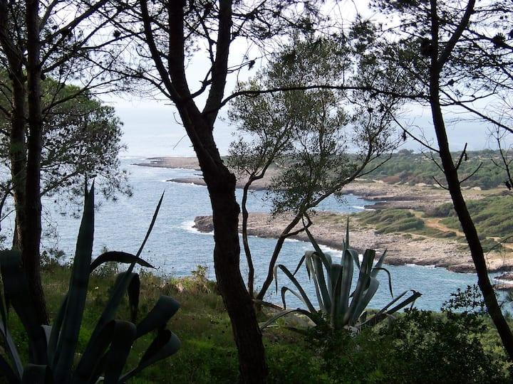 Porto Selvaggio - Il gelso rosso