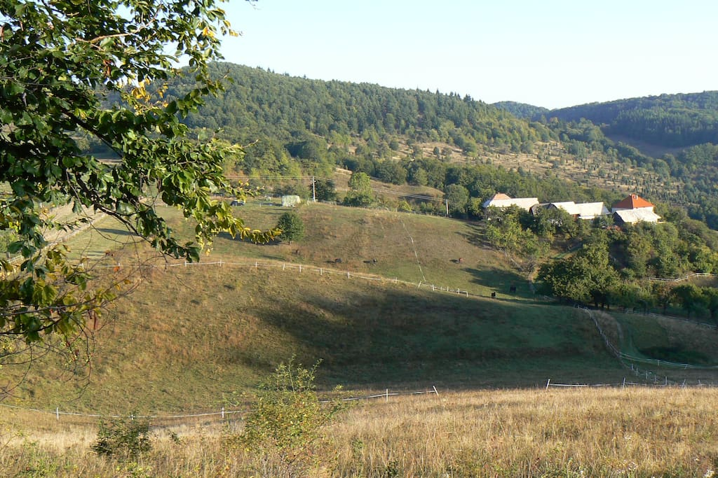 View on Brzov