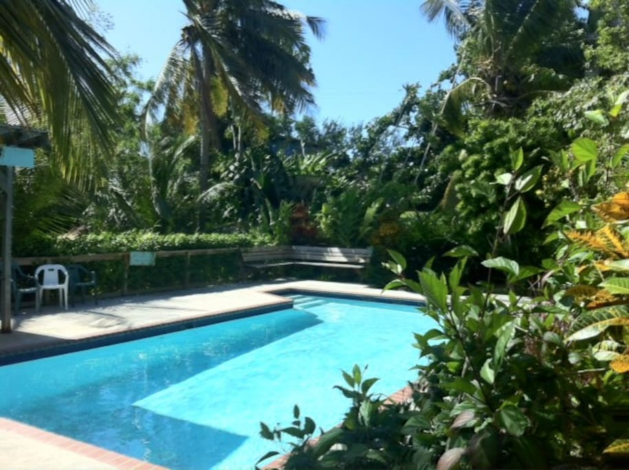 Our chemical free, salt water pool is shared with the other wonderful guests at la finca caribe...