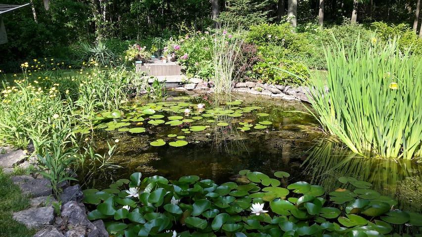 The goldfish pond.