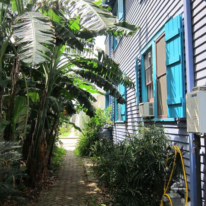 New Orleans lush vegetation