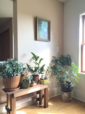 Plants for fresh air. Our house is pretty well lit naturally all day!