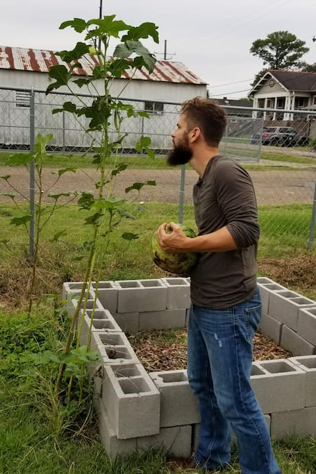 Working on the Okra and Watermelon