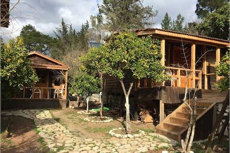 Olympos orman evleri yoga doğa - Yazır Köyü