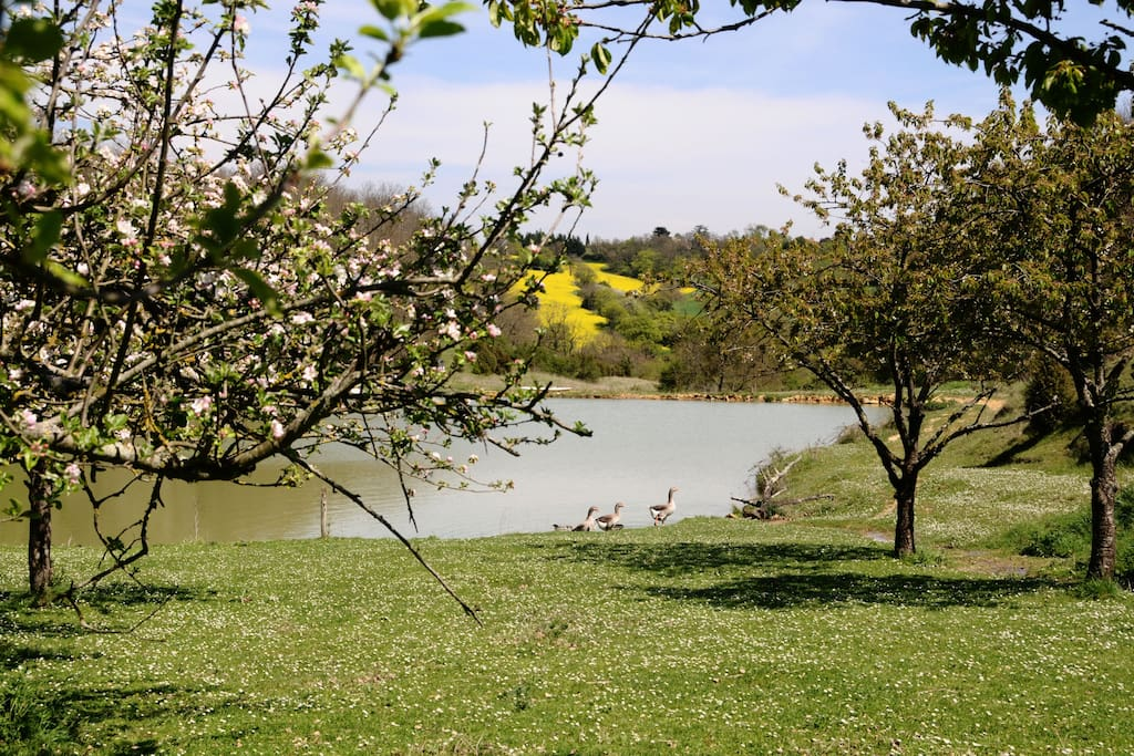 our lake in the spring