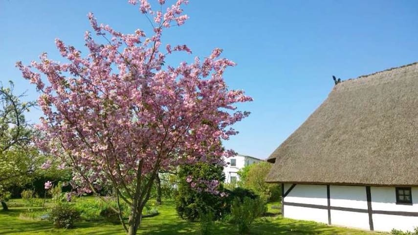 Ferienwohnung auf ehemaligem Hof - Börgerende-Rethwisch - Daire