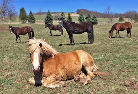 Horses! The Guest House at Rosemary Farm Sanctuary - South Kortright - บ้าน