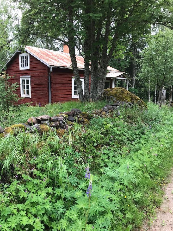 Litet hus i skogens djup