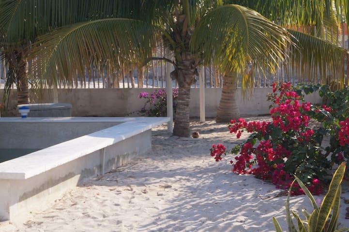 """"""" La casita  de los árboles """"  Puerto Chelem."""
