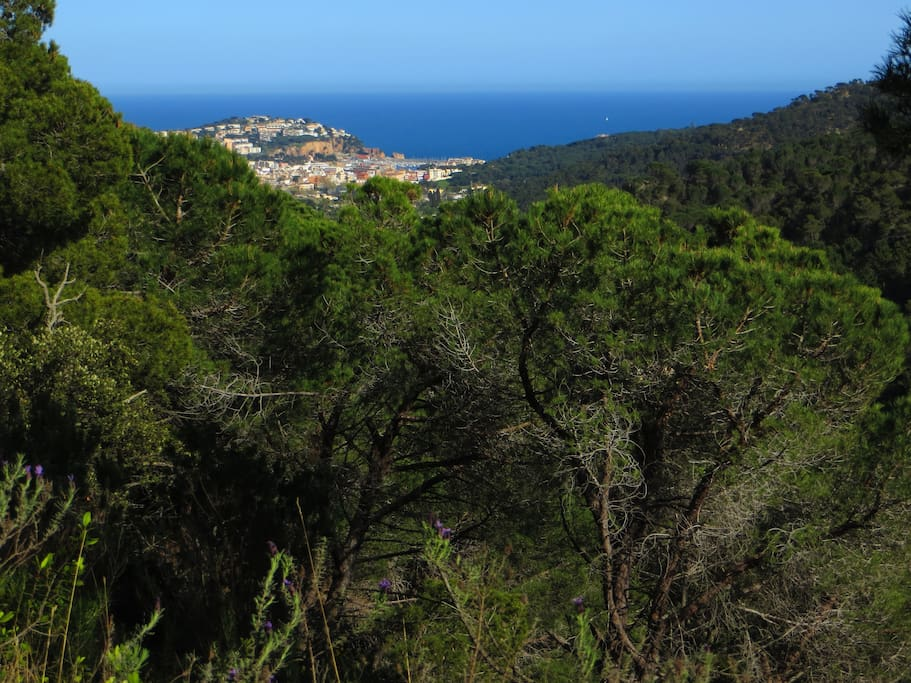 View on Sant Feliu de Guixols from the villa