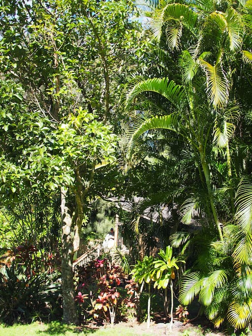 View of the cottage through the tropical foliage.