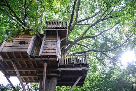 La Cabane de la Rivière - proche de Paris - Orly-sur-Morin - 樹屋