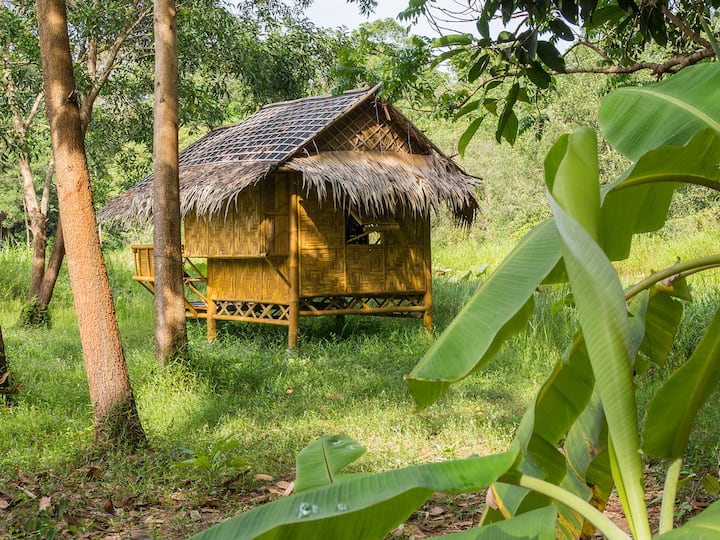 Wichai's Jungle Homestay