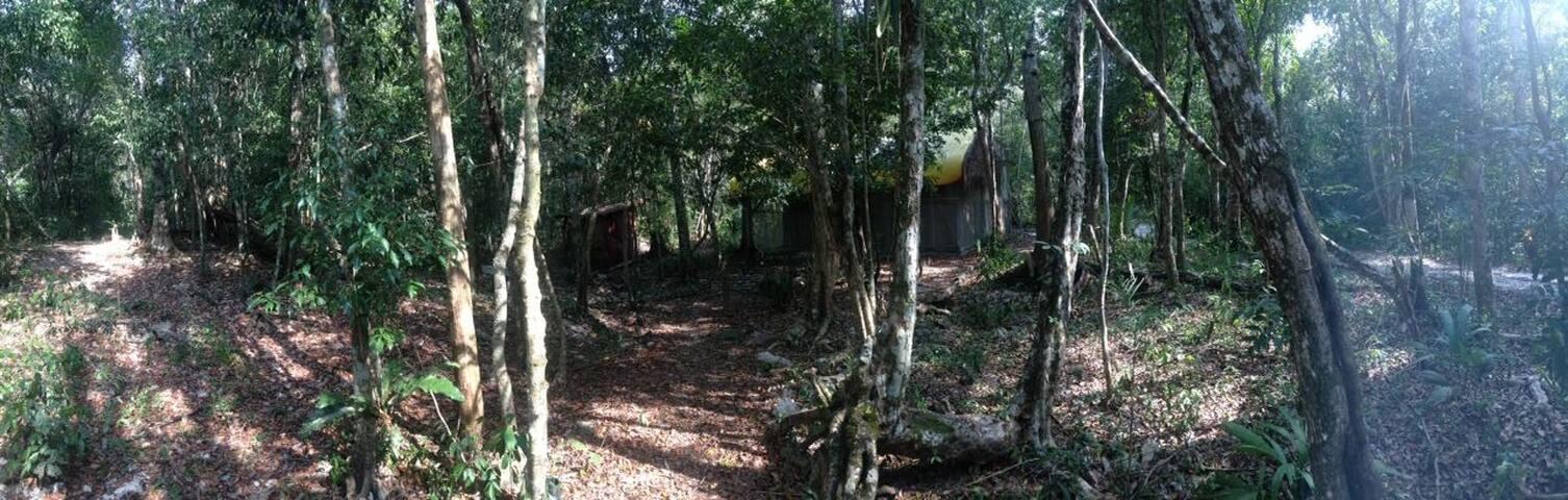 Cabin in the jungle of tulum - Macario Gómez - Cabin
