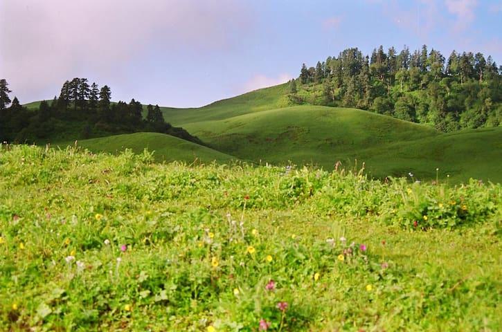Scenic View Pihu Homestay