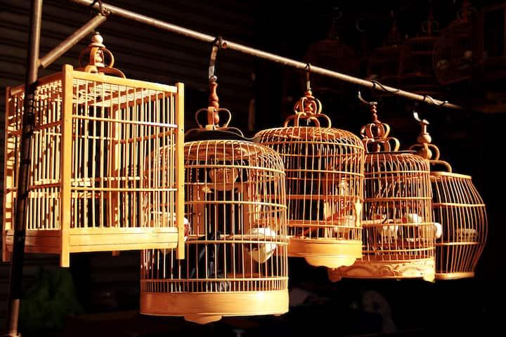 市井生活 · 大爷的鸟笼