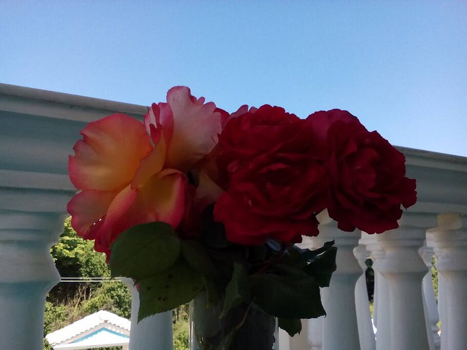 Roses from the garden.