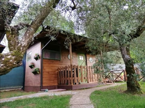 Houten bungalow in groen X2