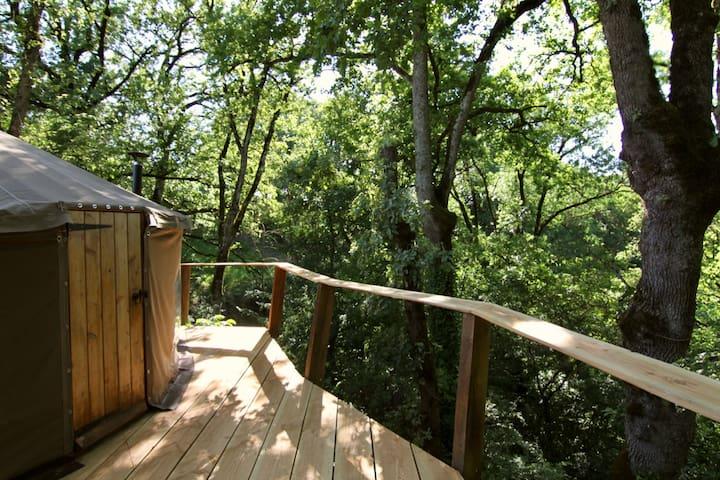 Tree Tops - woodland yurt