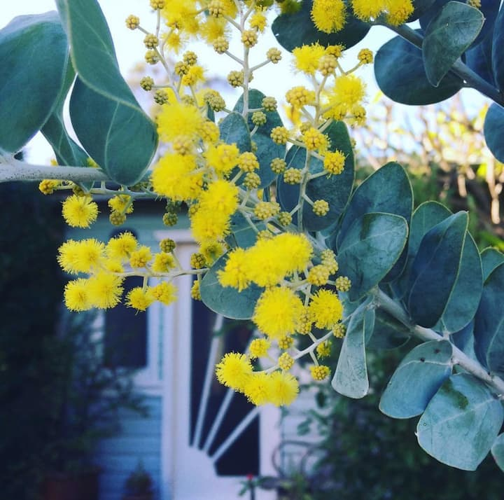 Dusty Miller: beach cottage with rambling garden