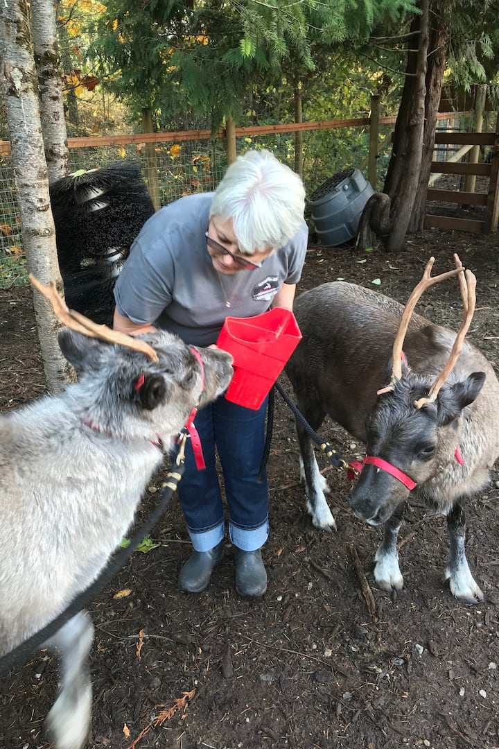 Santa's Baby Reindeer Willow&Jingle Bell