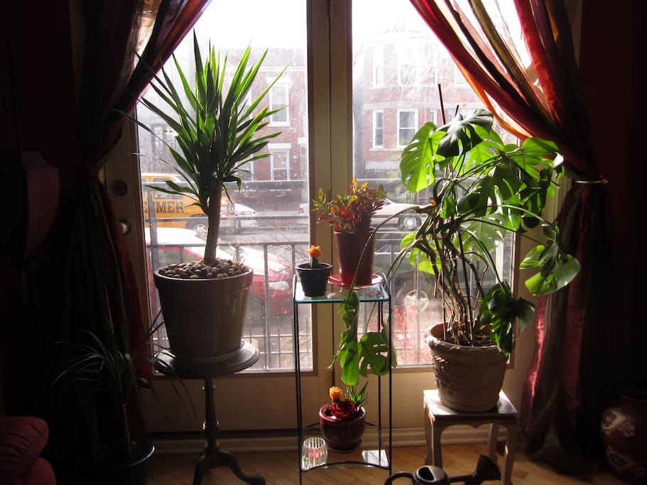 Plants in front room with opening french doors.