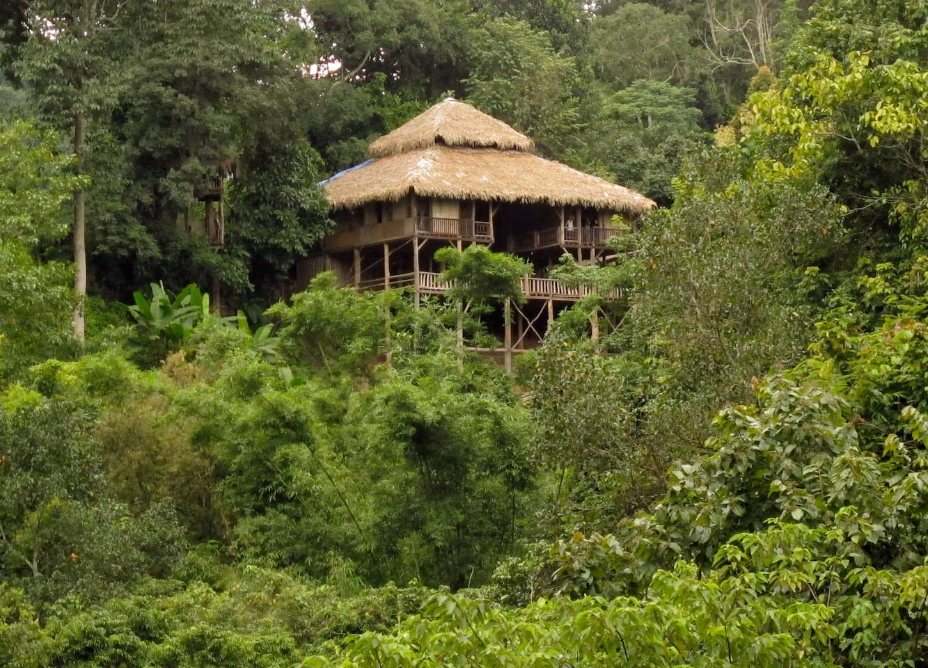 Tree House Hideaway nestled amongst the jungle-scape
