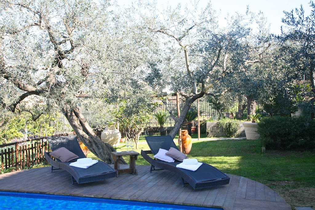 Garden with Sundeck and Pool