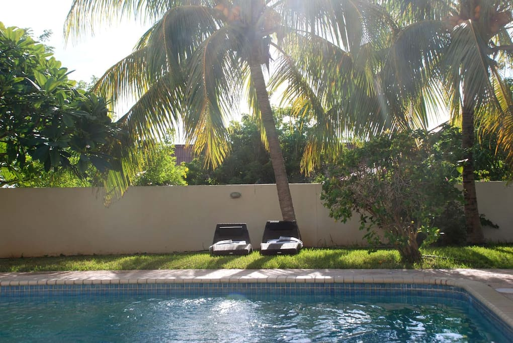 Sunloungers in the shadow of the palm trees