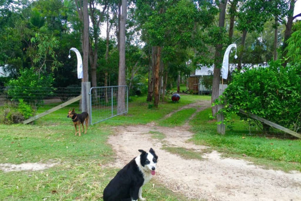 Waiting to greet you, our extremely friendly super host dog, Sky the border collie. Always receives 5 star reviews ⭐️⭐️⭐️⭐️⭐️