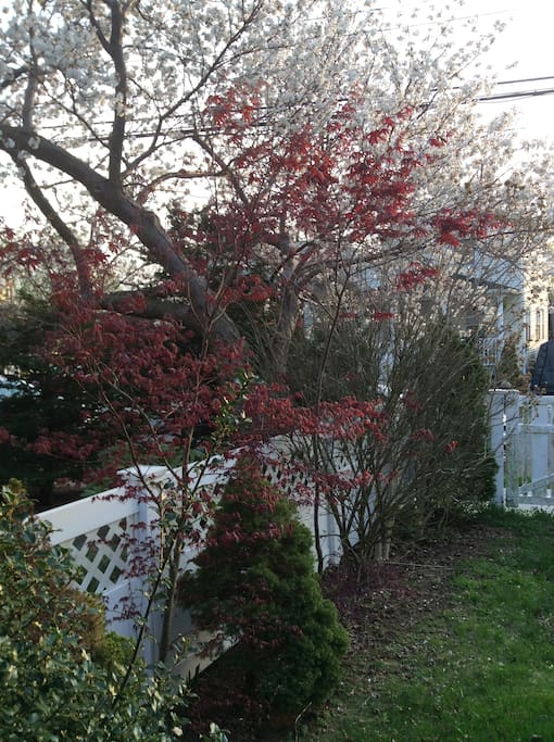 Spring in our front yard!