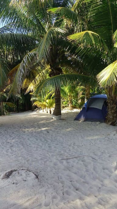 Enjoy a rustic tenting experience under our tropical canopy!