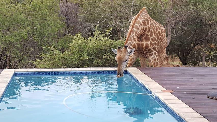 Villa Ingwe Luxury Bush Villa with Private Pool