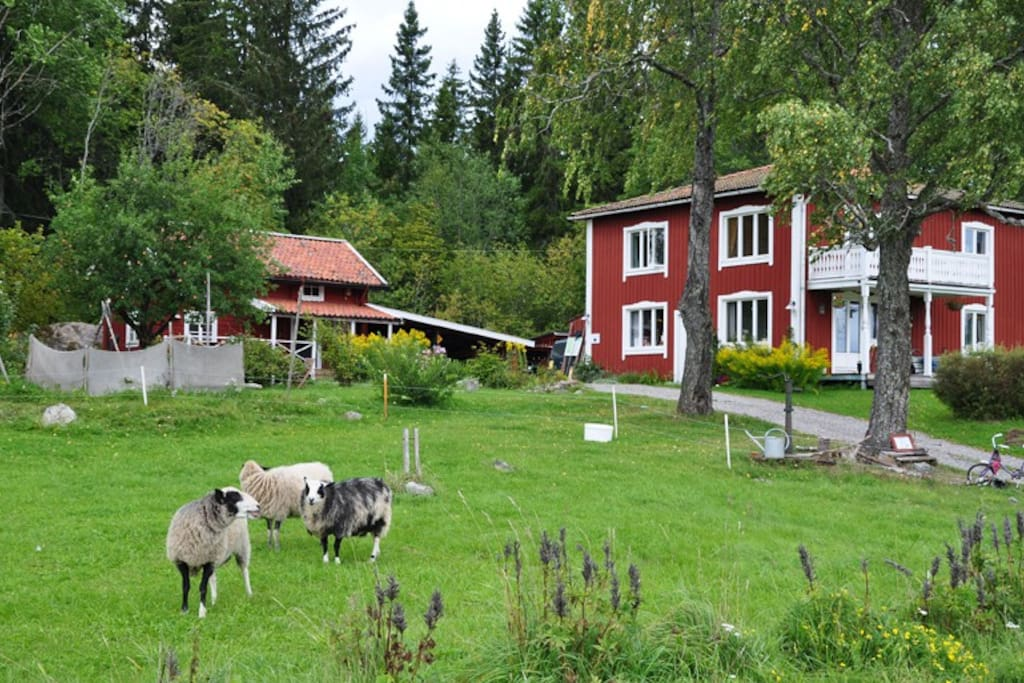 Overview - The Old Cottage on the left - Our own house at the right - Our sheeps in the front....