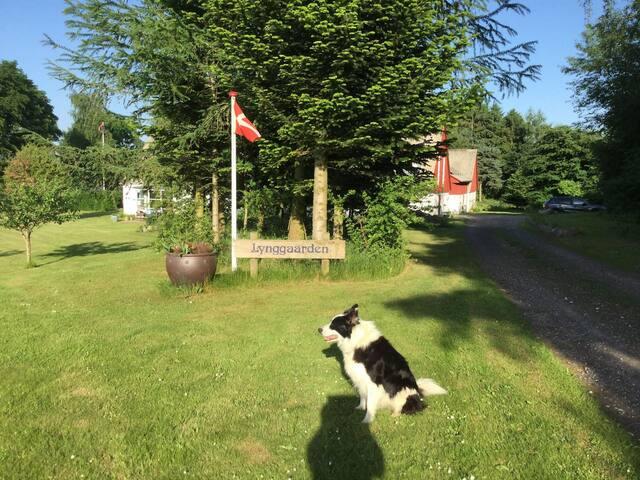 Lynggården Rom3 - ejendom i naturskønne omgivelser