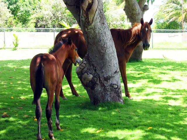 Neighborhood horses coming to say hello