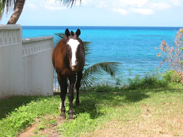 Sharing the path with the horses down to the beach