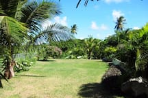 Large grass lawn