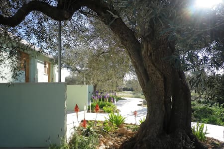 Quiet large family S/C Olive farm. - Tortosa - Casa