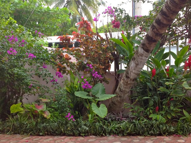 Front courtyard garden with lush tropical plants.